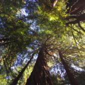 Respirar con un árbol (Español)